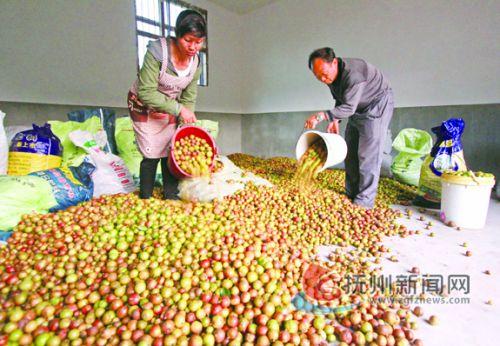 油茶产业富民 拷贝