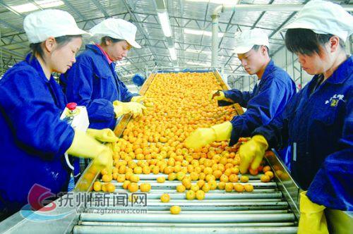 蜜橘分选生产线 拷贝