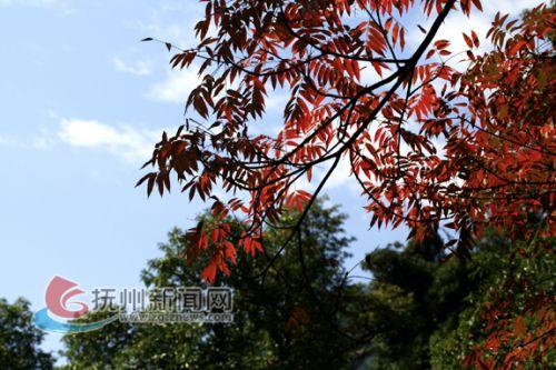 2秋天的会仙峰层林尽染,景色美不胜收 拷贝