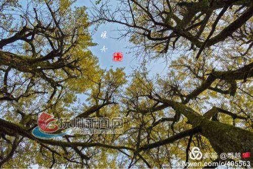 这一刻,我拥有蓝天白云高高的大树温暖的午后时光,生命如此美好,还有