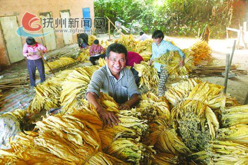 烟叶产业已成为农民脱贫致富的主导产业.jpg 拷贝