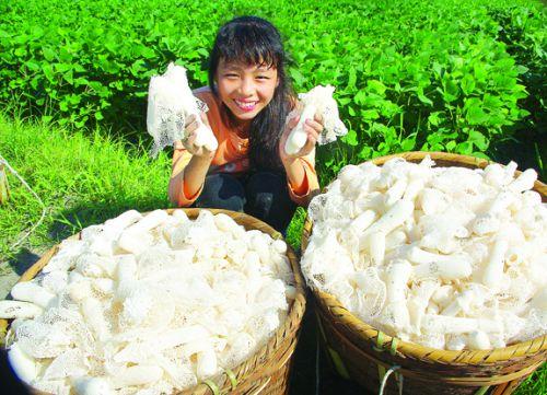 p3黎川德胜镇德胜村里横生产队展示收获的竹荪