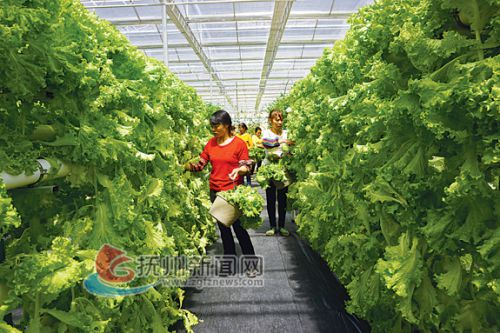 德勝鎮現代農業示范園-