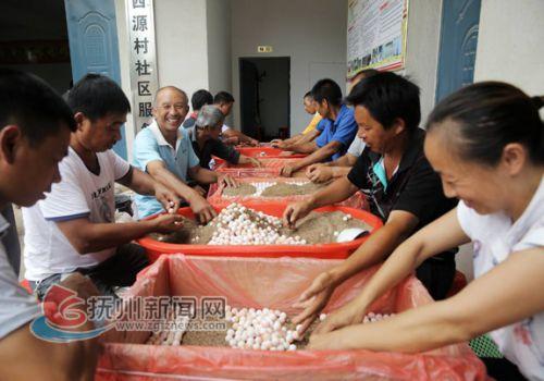 甲鱼产业-