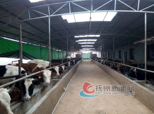 菜牛养殖基地(1)-