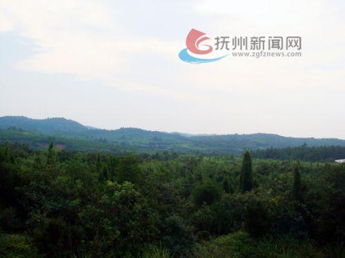 崇仁县许坊乡谙源村古竹土地开发项目实施前-