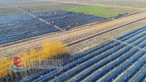 金溪县现代农业示范园田园综合体之一角