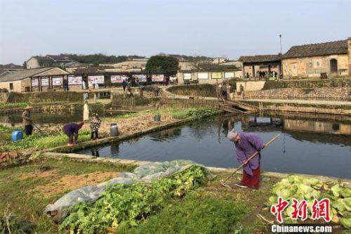 身穿明代服饰的竹桥古村村民表演田园牧歌场景。 吴鹏泉 摄