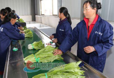 崇仁:现代农业促进农民增收致富