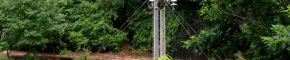 乐安:冒雨抢修供电线路