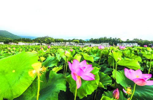 中国莲花景区——曾恒贵
