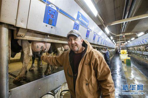 """(國際·圖文互動)(1)通訊:""""希望我們的乳制品順利裝船駛向中國""""——美國奶農期盼中美貿易爭端早日解決"""