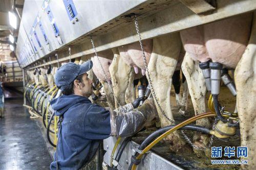 """(國際·圖文互動)(5)通訊:""""希望我們的乳制品順利裝船駛向中國""""——美國奶農期盼中美貿易爭端早日解決"""
