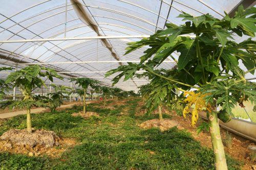态和园水果种植基地
