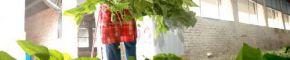 乐安:蚕桑产业富农家